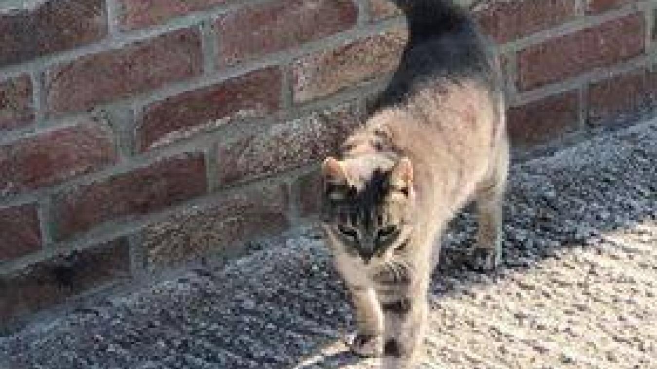 Grosse chatte PET