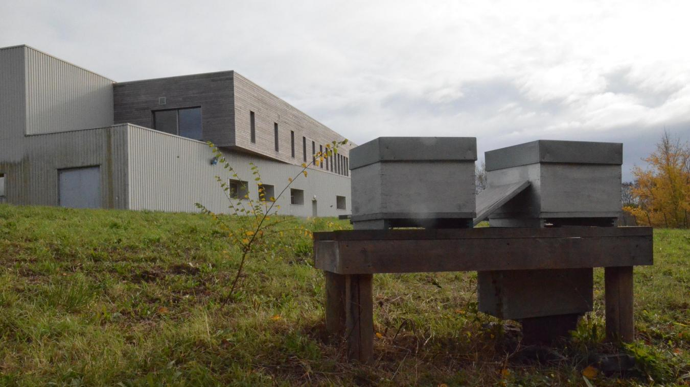 Cinq ruches - bientôt sept - permettent de juger la bonne santé environnementale du parc de Landacres.