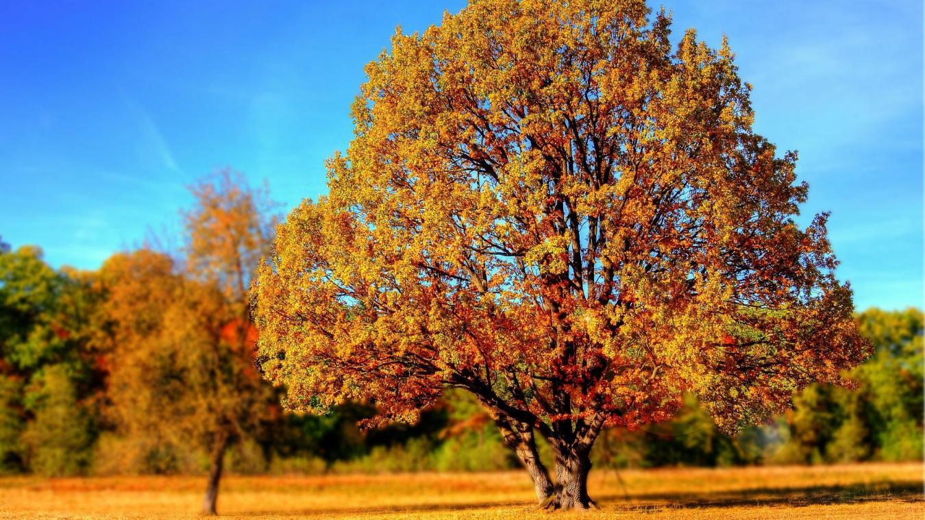 Grâce à ce festival de l'arbre, découvrez comment prendre soin des arbres d'ornement de votre jardin.