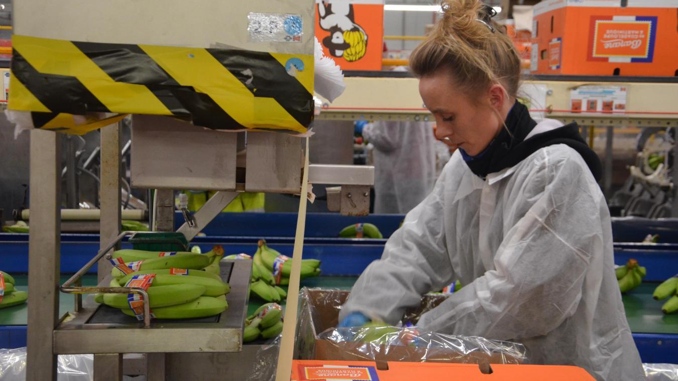 Depuis avril 2015, un ruban bleu-blanc-rouge permet d'identifier la banane des Antilles, vendue à l'unité plutôt qu'au kilo dans les magasins.