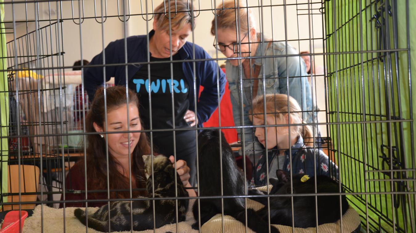 Une soixantaine de chats vous attendent ce dimanche à Équihen-Plage.