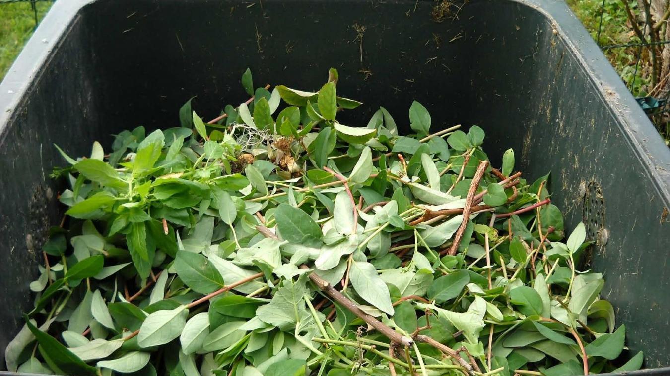 Des bacs déchets verts seront fournis là où la demande sera faite.