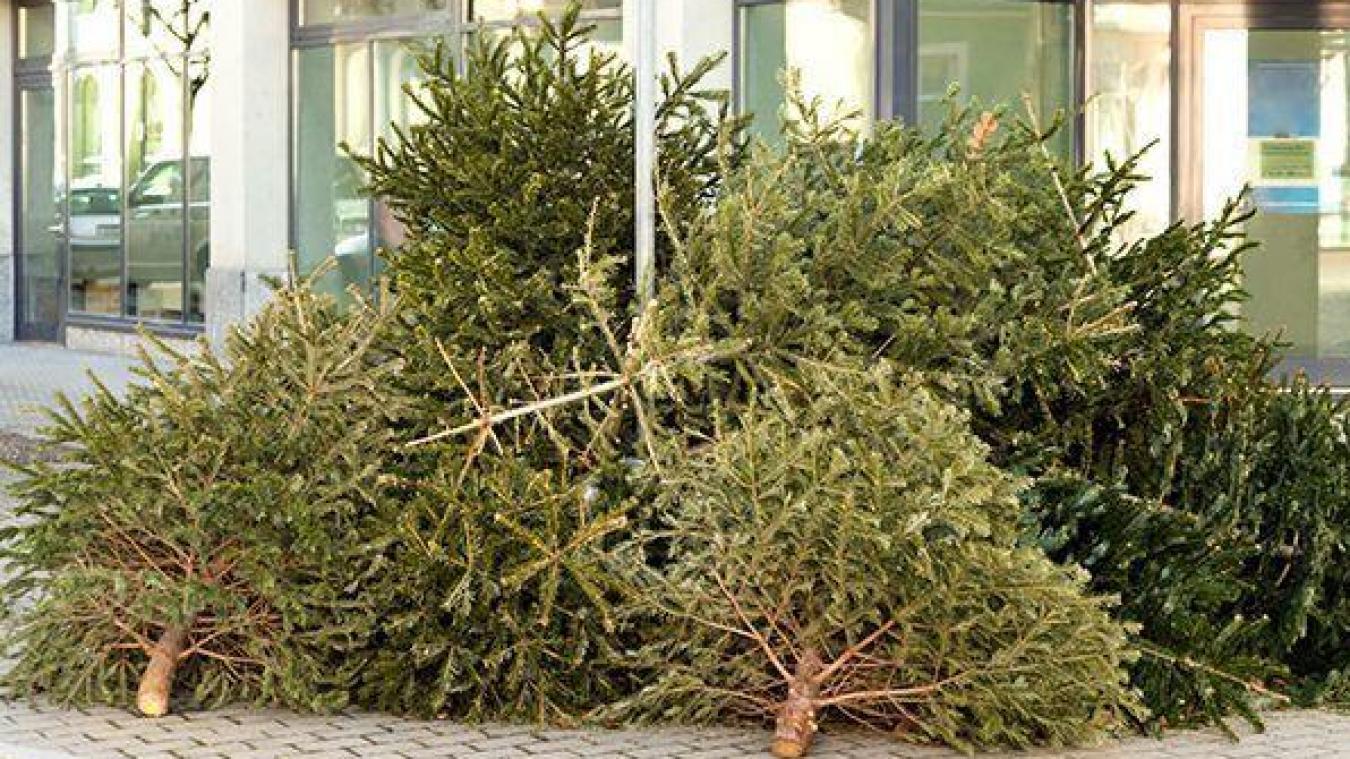 Cab : le calendrier de la collecte des sapins de Noël
