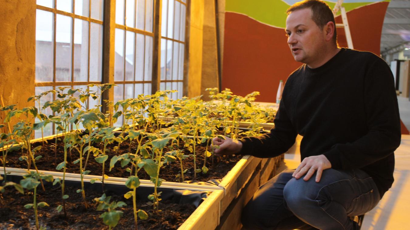 Des plants de pomme de terre poussent en ce moment-même à Cité nature.