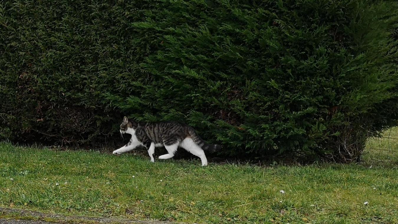 En l'espace de quelques minutes, nous pu avons observer deux chats, dans la rue Murat.