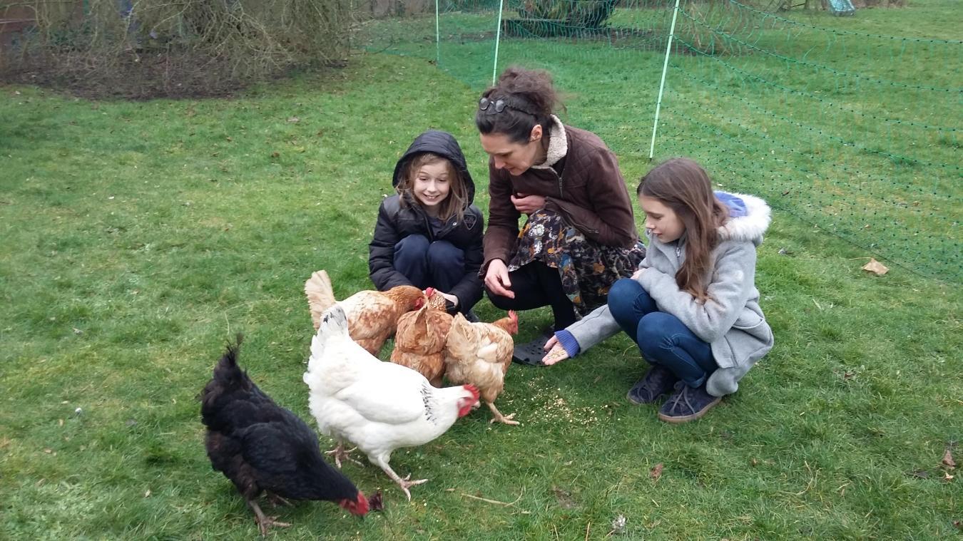 Givenchy-en-Gohelle : leur animal de compagnie est une poule d'élevage