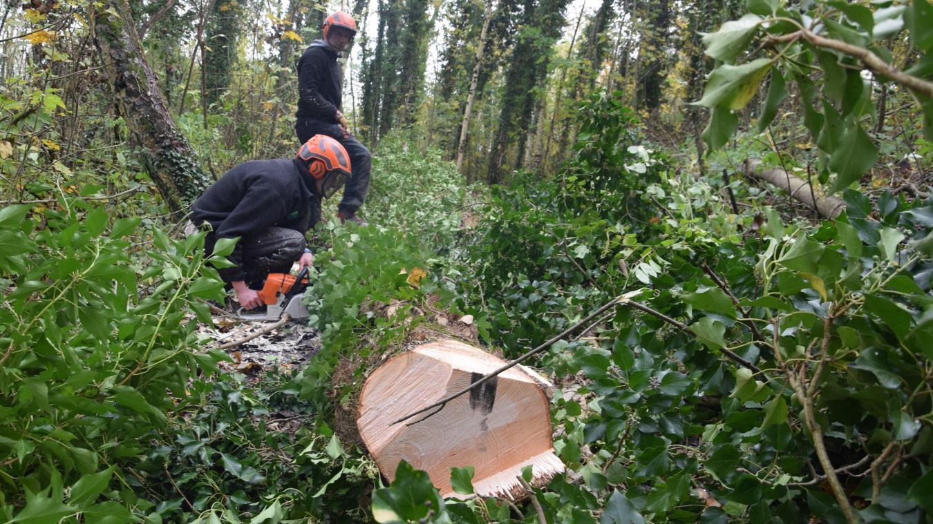 Même bien équipé, l'abattage des arbres n'est pas sans danger.  Photo illustration