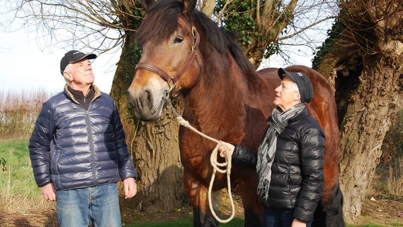 Marie et Guy Denaes seront au Salon de l'agriculture avec Calie du Marais, leur jument Trait du Nord de 7 ans.