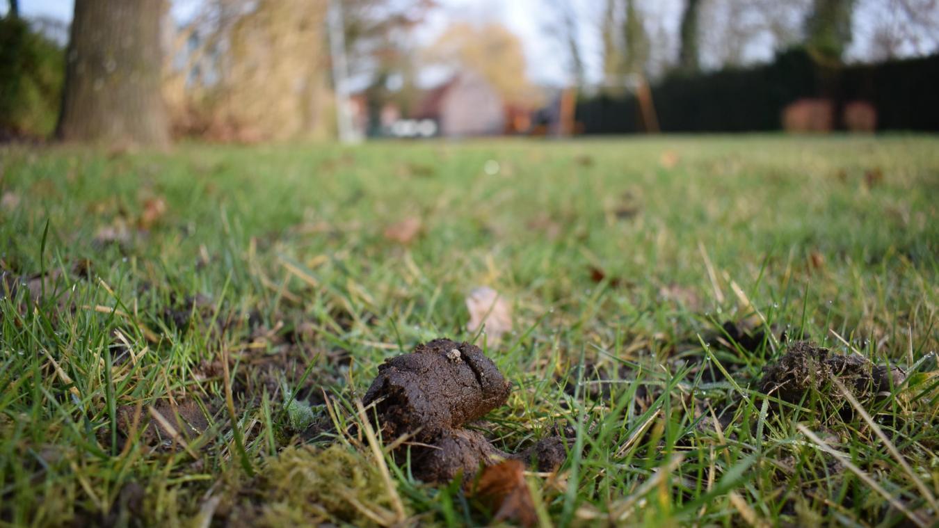Dans la commune, les déjections canines ne peuvent être laissées sur place. Parmi les zones minées, le cimetière, les trottoirs et le point fort Yser, lieu de pique-nique et de jeux pour les enfants.