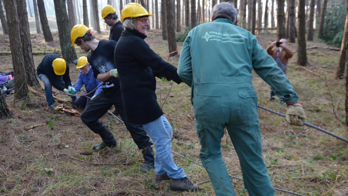 Une dizaine de bénévoles font tomber vingt arbres en une semaine au Mont Saint-Frieux en utilisant un système de poulie.
