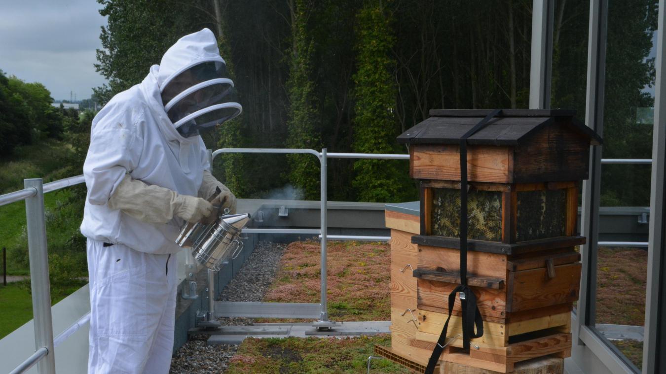 Indice : la mascotte vit dans la ruche de la Maison de la nature.