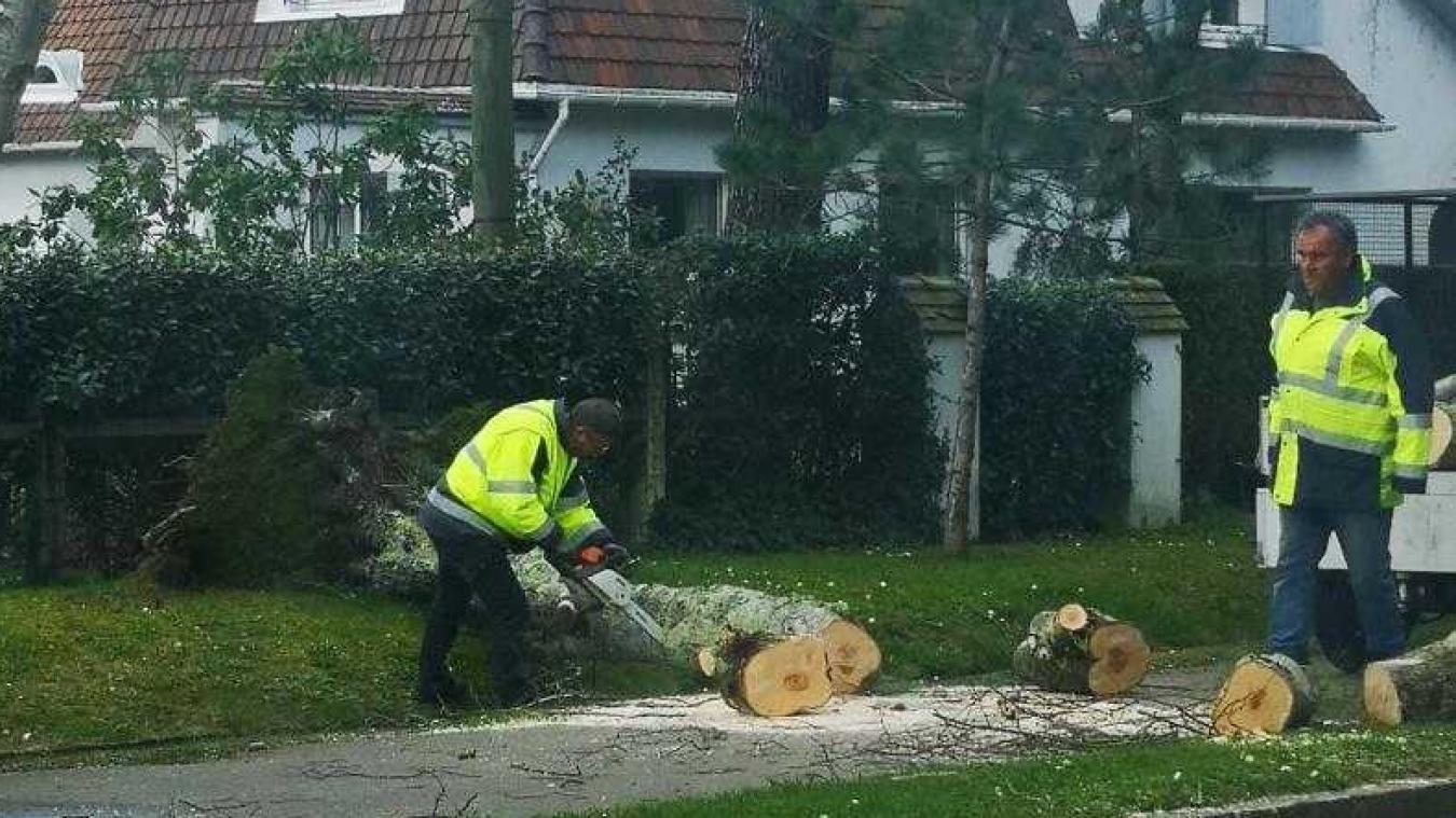 Le Touquet : un arbre tombe et embarque un fil électrique