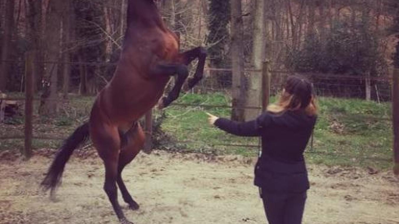 Imbroglio - Anzin-Saint-Aubin: le cheval Figo a retrouvé sa