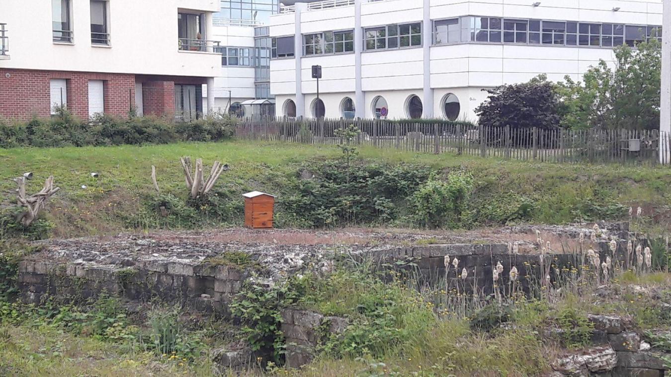 Béthune : les actions de la ville pour assumer son ambition écolo