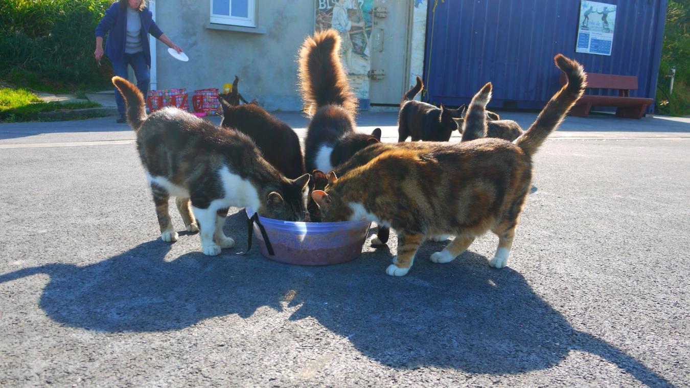 Joëlle fait partie des nourrisseurs de l'École du Chat du Boulonnais. Des bénévoles qui se relaient quotidiennement pour nourrir les colonies de chats libres, comme ici à Équihen-Plage.