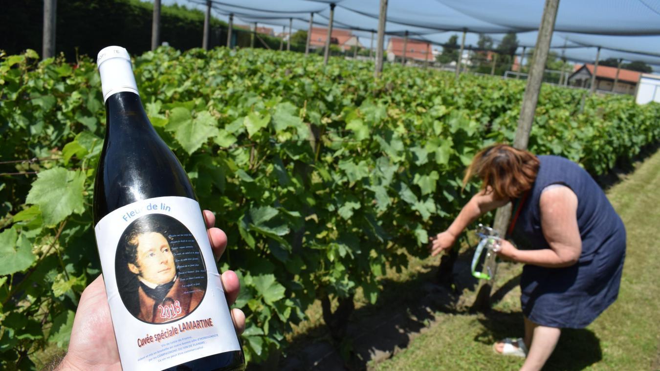 Dans les Hauts-de-France, il existe huit vignobles associatifs et Hondschoote est le plus ancien. La présidente de la confrérie, Elisabeth Beddeleem, et les compagnons ont connu un très bon cru 2018 !