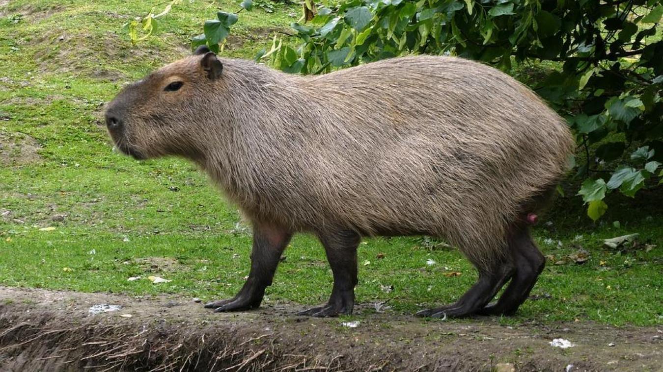 L'animal n'a plus été vu depuis le 14 juillet. Photo Pixabay