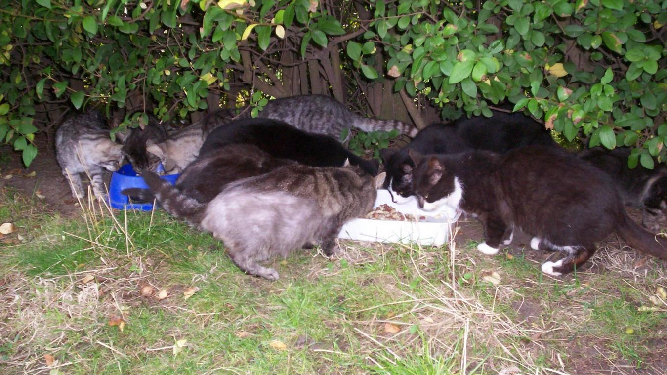 Les responsables d'associations accueillent de nombreux chats et sont obligés de faire appel aux dons des particuliers et aux familles d'accueil pour s'en sortir.