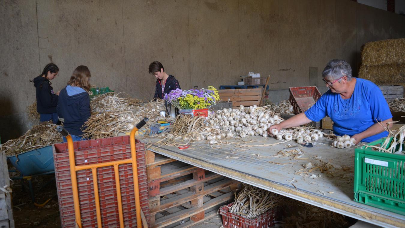 Locon : comment se préparent les producteurs pour la foire à l'ail du 25 août