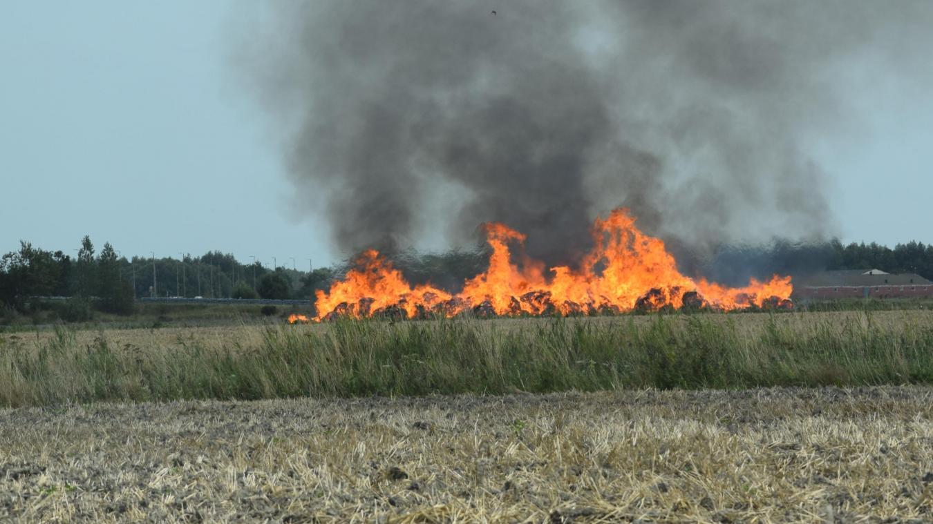 Un agriculteur a été contraint de détruire une partie de sa récolte de lin hier.
