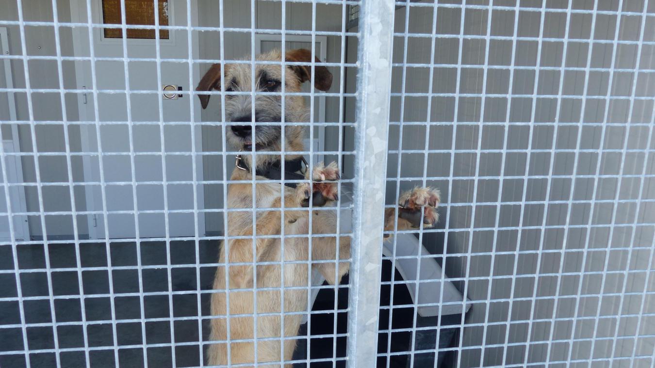 Dans la partie SPA, les chiens ont un box individuel. Toutefois, ils sont deux par courette afin de les sociabiliser en attendant de trouver un nouveau propriétaire.