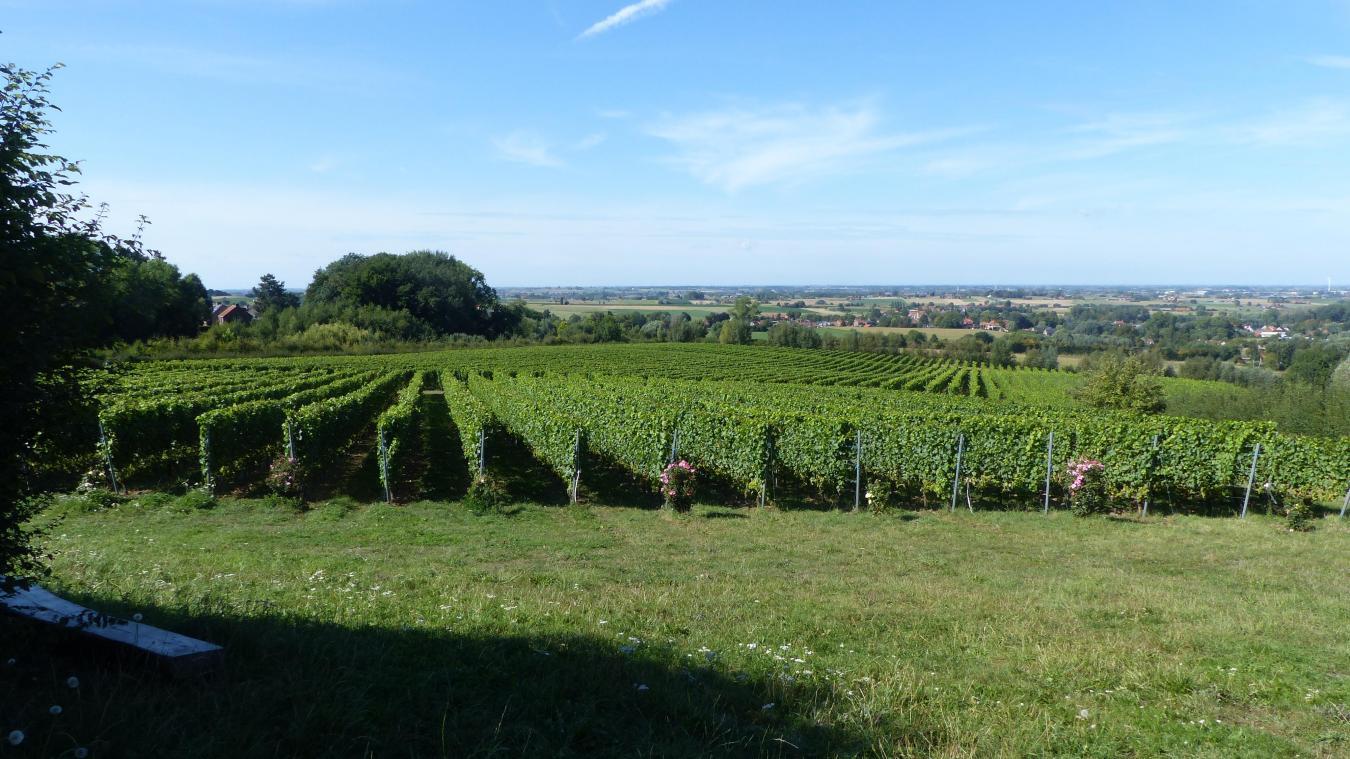Situé entre le Mont-Noir et le Mont-Rouge, le vignoble s'étant sur 18 ha et produit près de 100 000 bouteilles vendues dans le secteur, mais aussi exportées en France, au Luxembourg ou en Suisse.