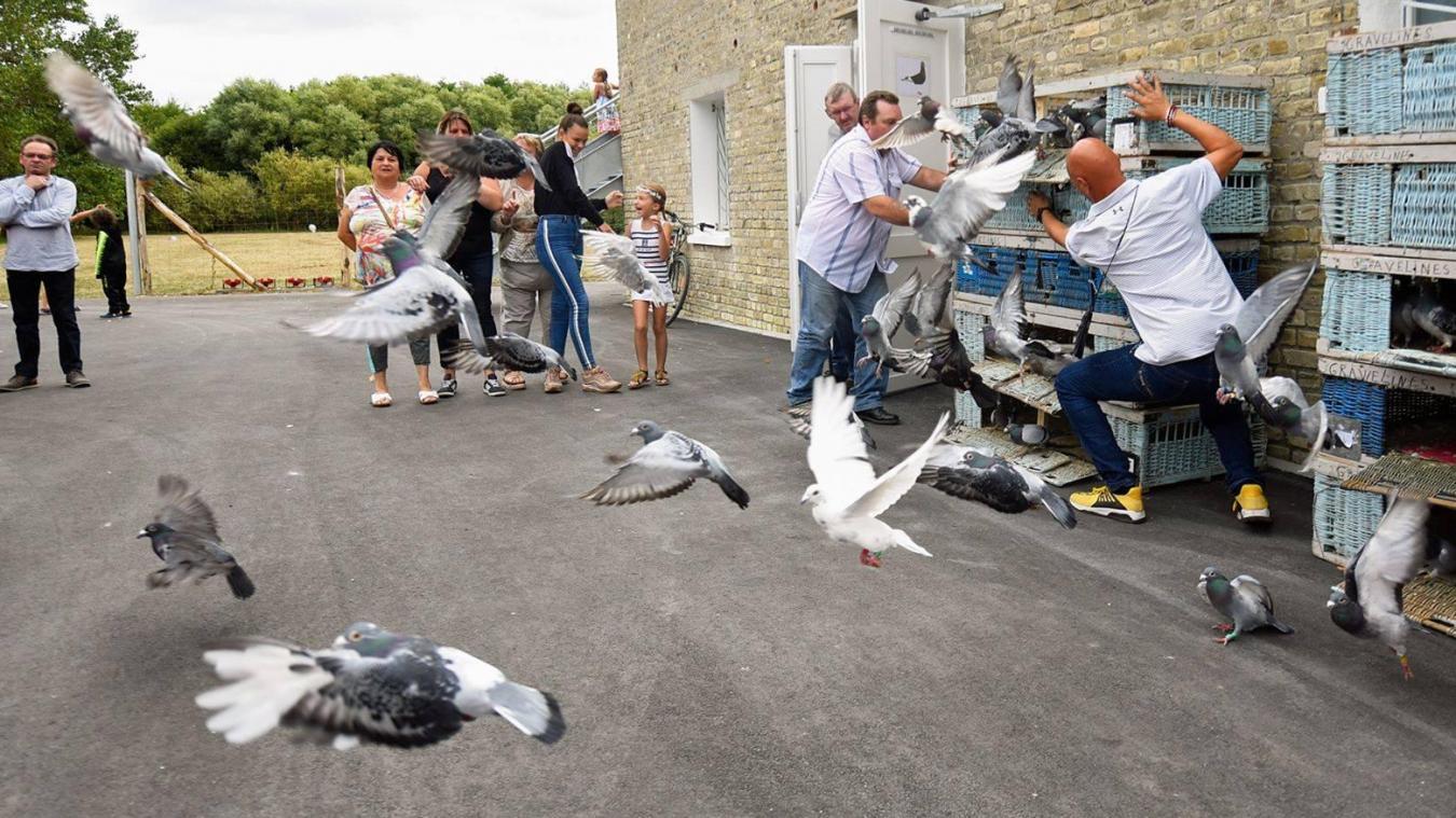 Les pigeons désormais à la ferme Decarpentries