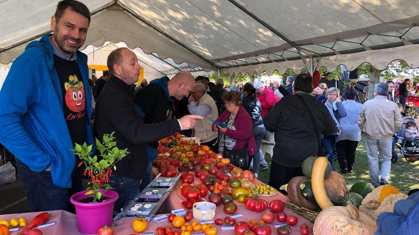 Haverskerque: des tomates par milliers (photos et vidéo)