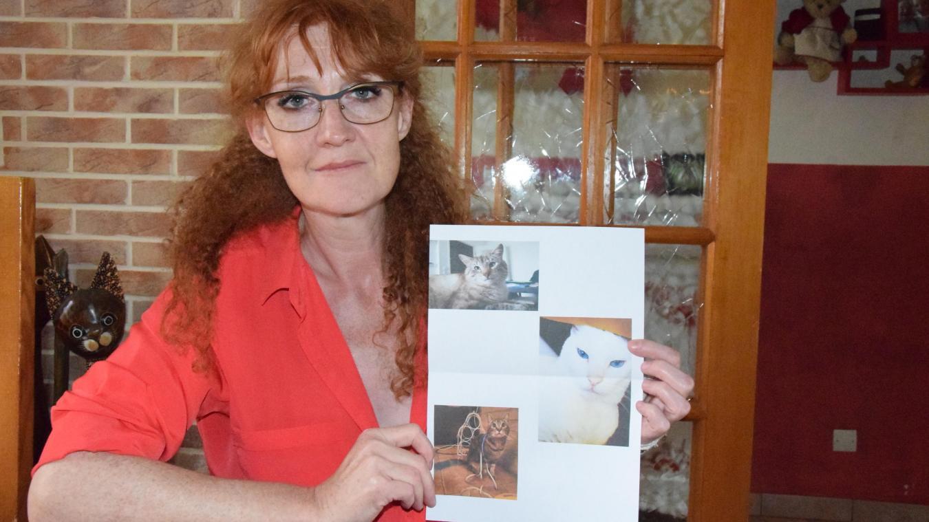 En 15 ans, Sylvie Delcourt a perdu sept chats, dont trois sur les trois dernières semaines.