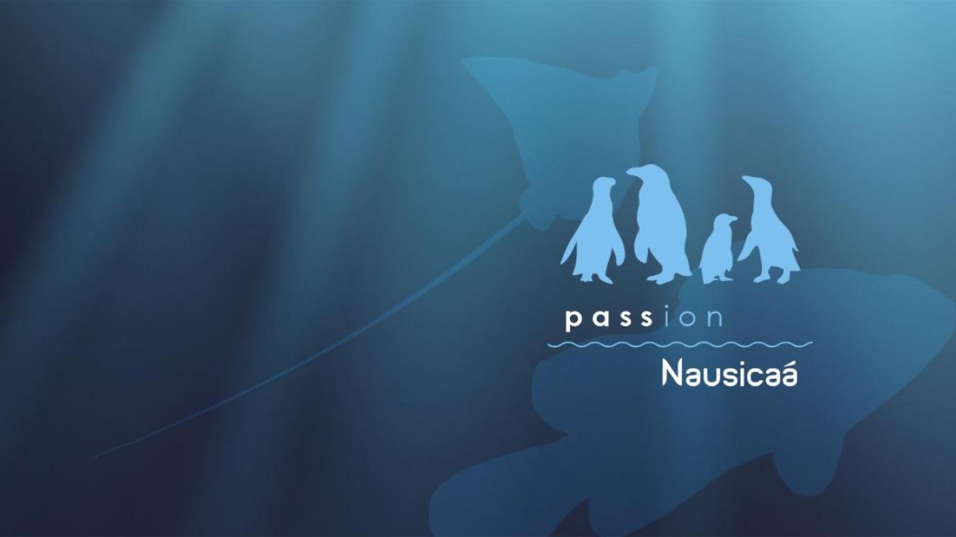 Découvrez le nouvel abonnement annuel de Nausicaá et profitez dès aujourd'hui de votre aquarium préféré en illimité.