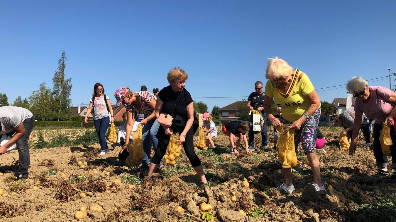 Beaucoup d'amateurs de pommes de terre sont venus en récolter à Estaires, ce samedi.