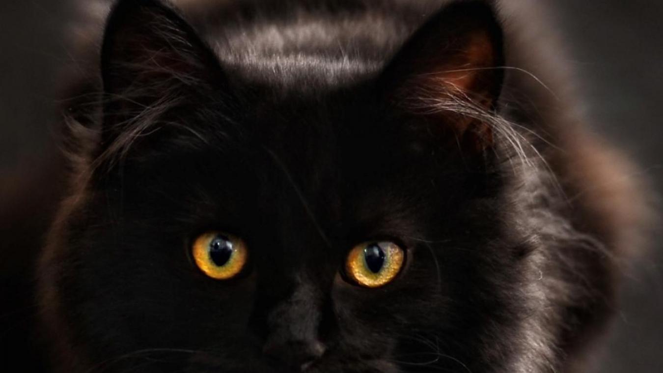 Au Portel, 7e salon de l'adoption du chat dimanche 6 octobre