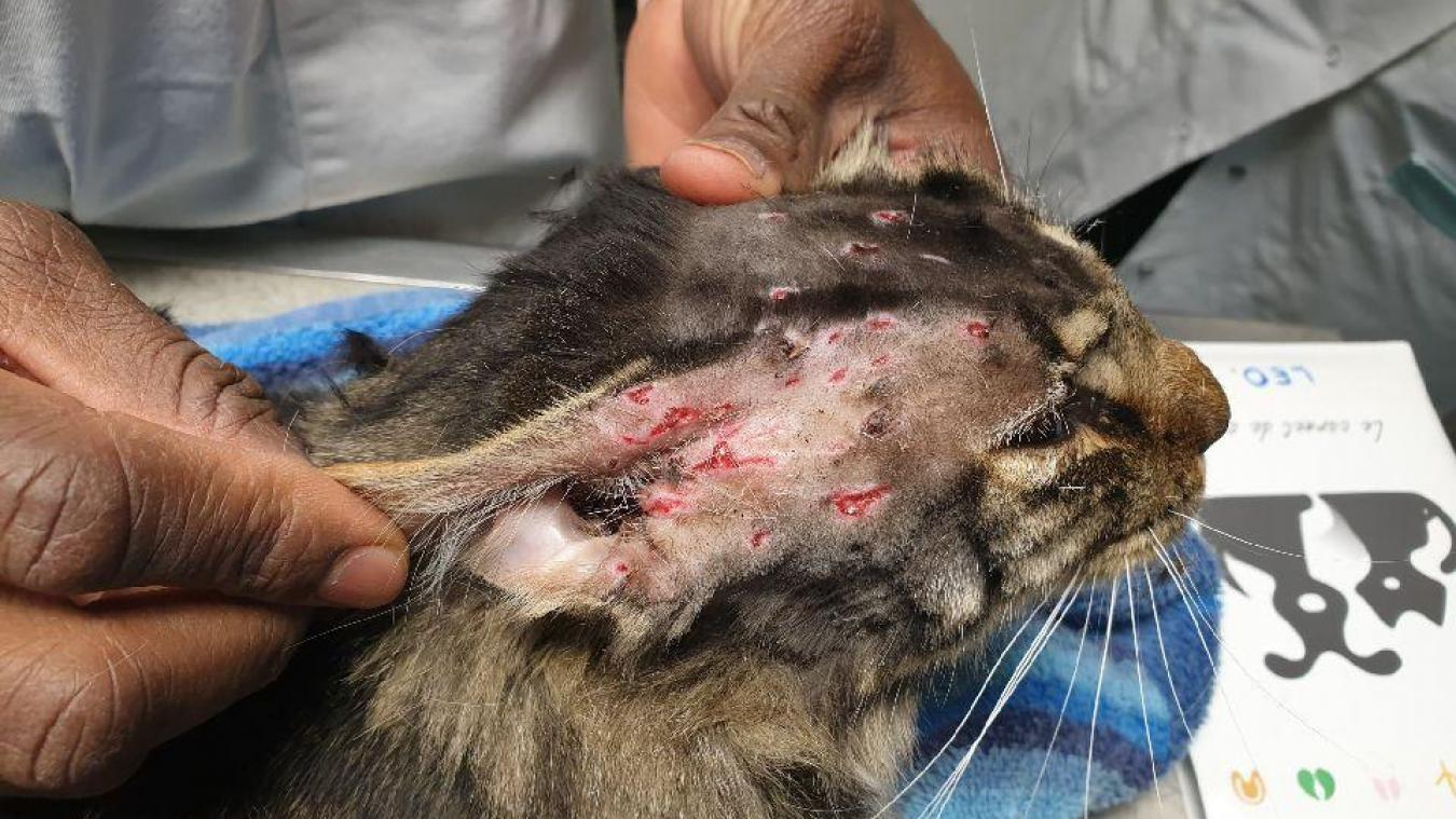 Le vétérinaire a retiré cinq balles de la tempe et du front de Léo. Avant d'en enlever 14, sur tout le flanc droit, après une radio.