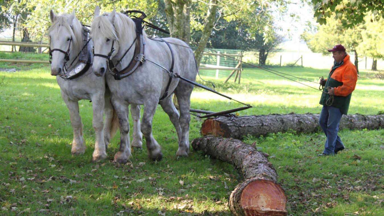 Les races locales comme le cheval du Boulonnais et le Trait du Nord vont bénéficier de ce plan d'action.