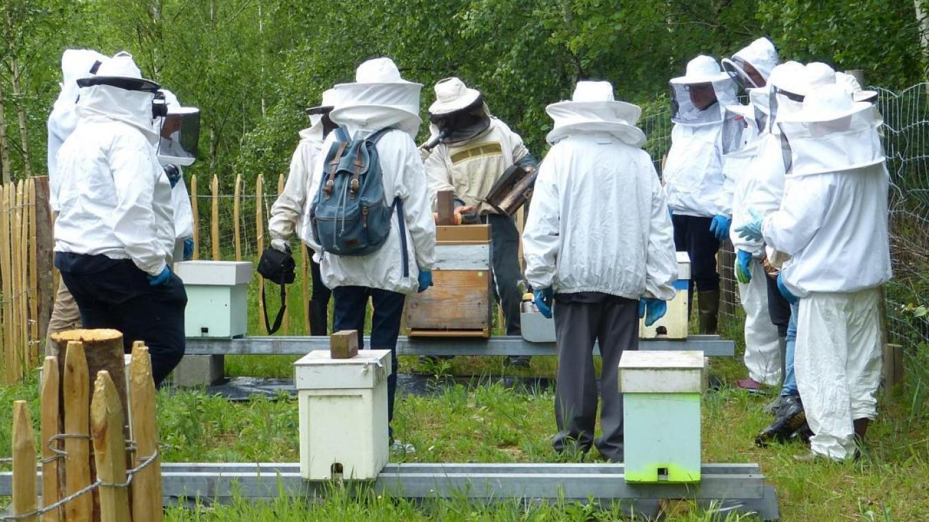 Depuis le mois de juin, le site du Lac bleu accueille des ruches. Des apiculteurs amateurs en prennent soin.