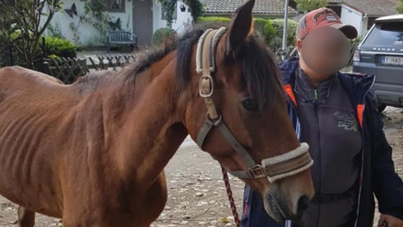 Le poney Black a été retrouvé ce mercredi 9 octobre en fin d'après-midi. Il était particulièrement affaibli. (Photo Facebook/De Drie Vijvers)
