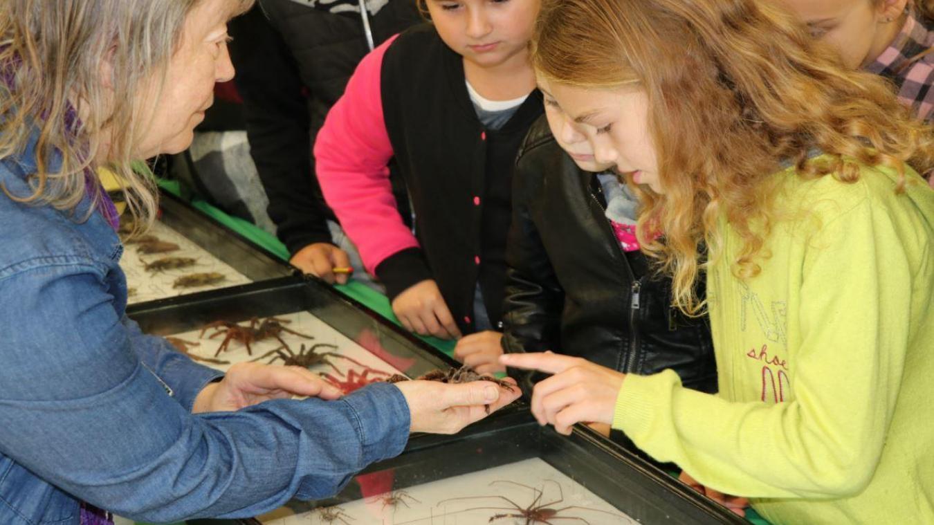 Hormis la 3D, les enfants auront aussi la possibilité de découvrir des insectes.