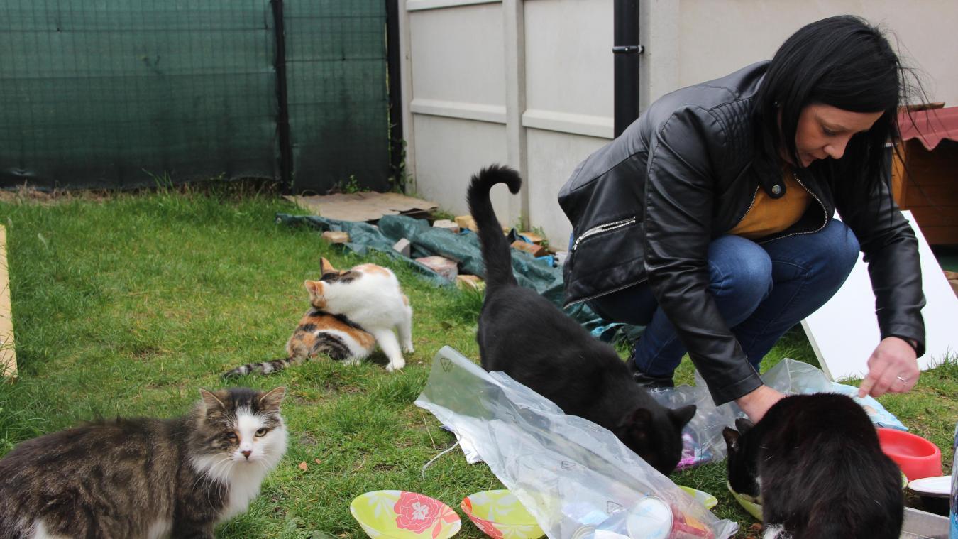 Auchel : Jessica Rault, en deuil des chats de la Cité 3