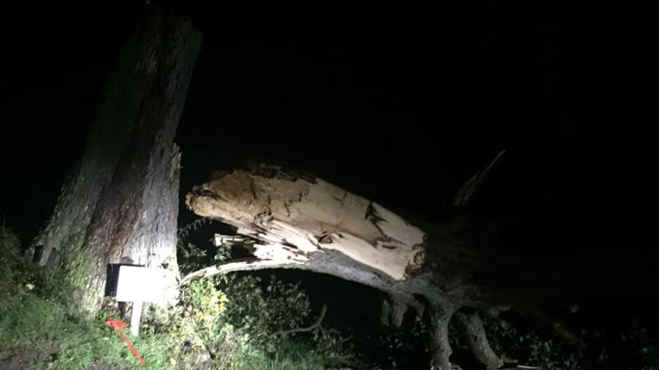 L'arbre rond de Beugin est tombé pendant la nuit. Photo : Aude Leclercq
