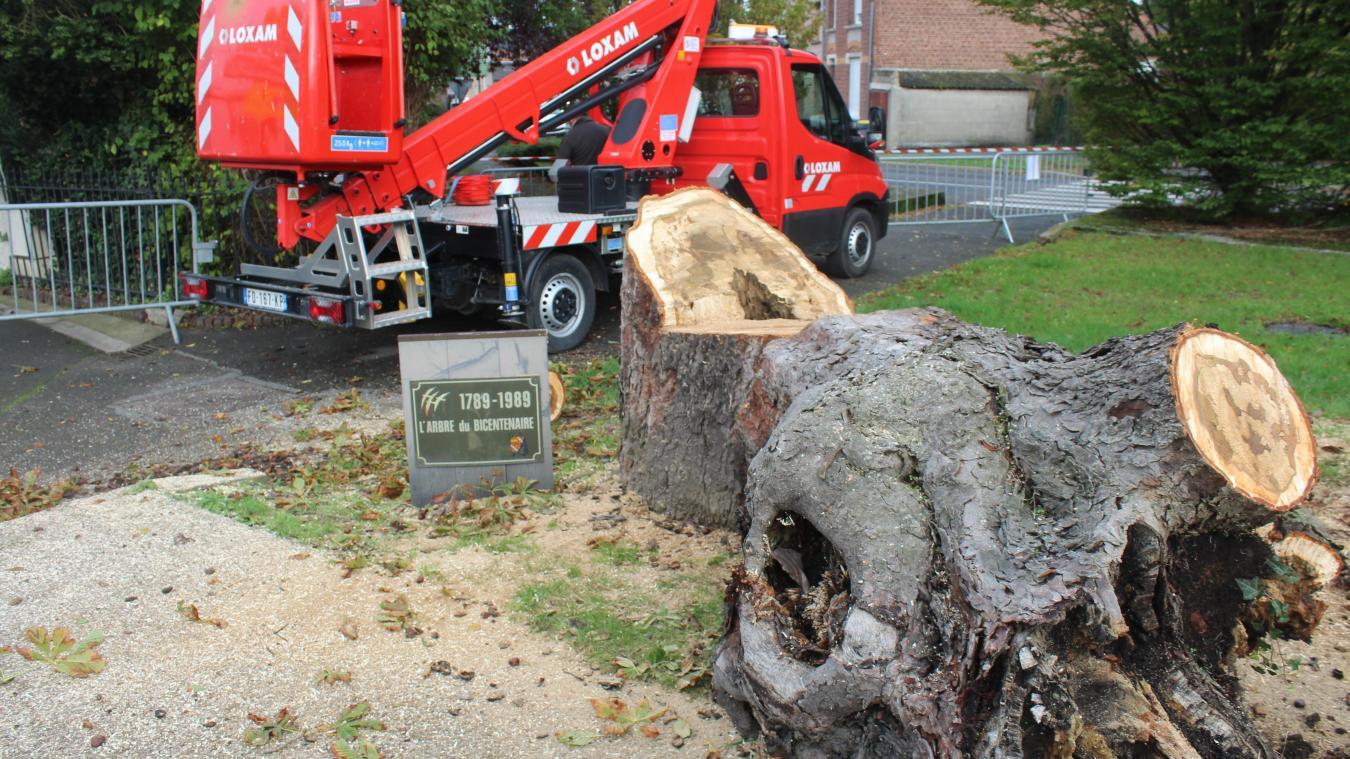 Annezin : l'arbre bicentenaire a dû être abattu