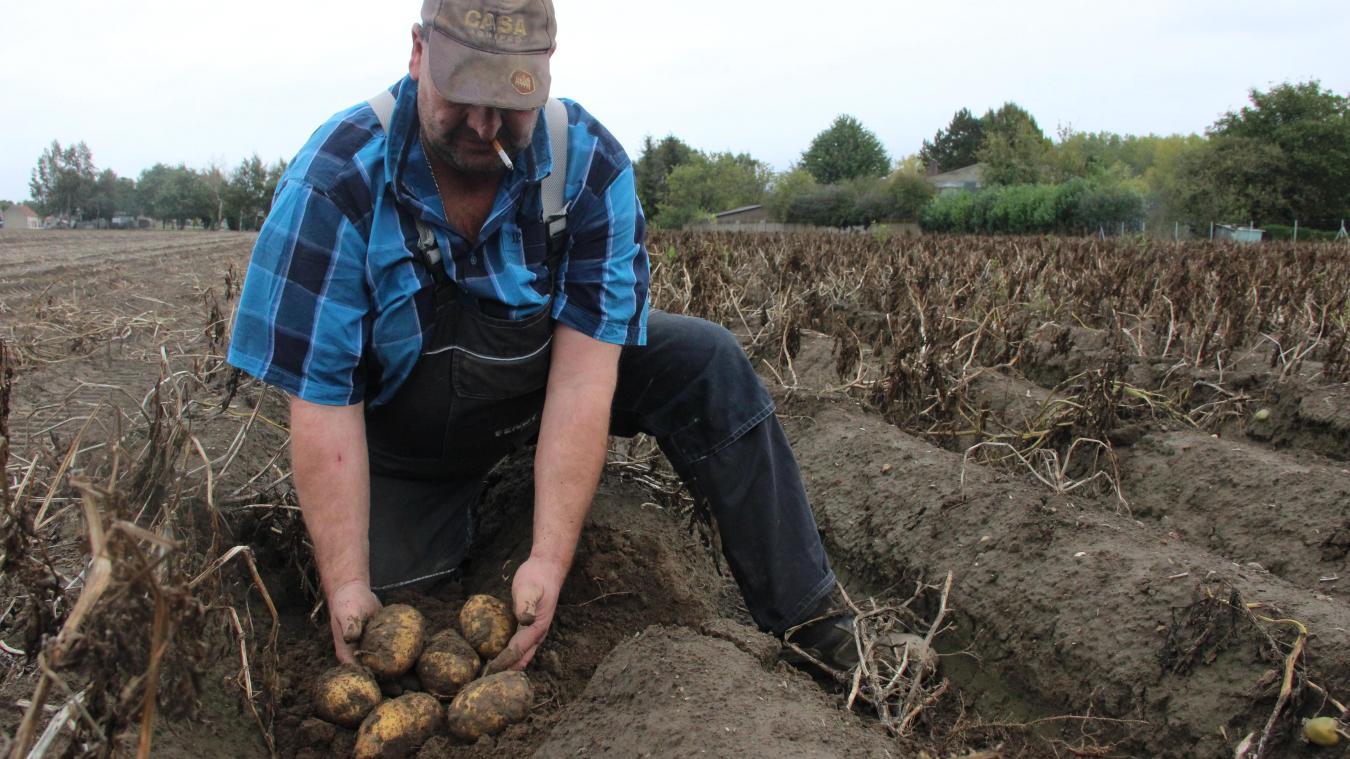 Philippe Laroche évalue son rendement entre 35 et 40 tonnes de pommes de terre par hectare.