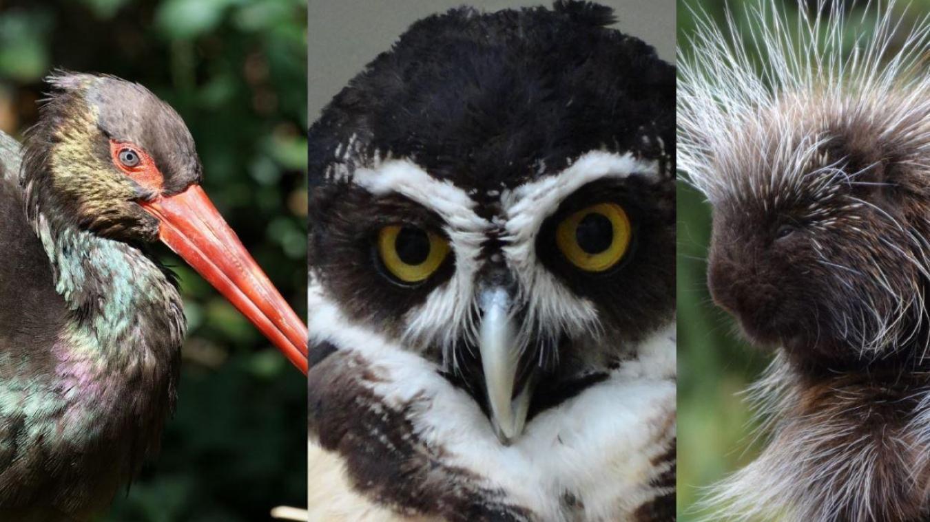 Trois nouvelles espèces sont arrivées au Zoo de Fort-Mardyck.