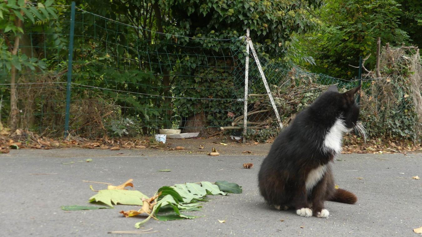 Un petit chat du site a été euthanasié vendredi. Aucun lien avec l'empoisonnement n'est démontré.