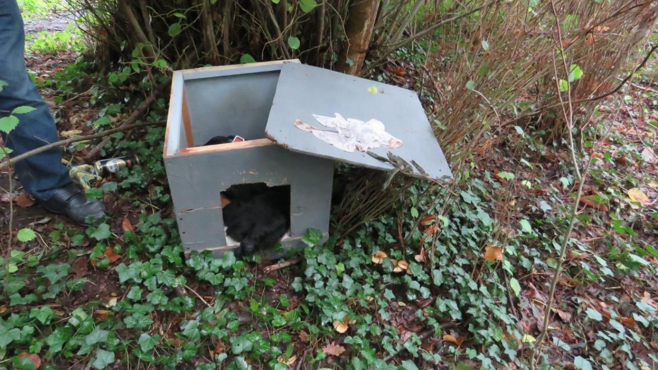 Le chien a été retrouvé dans ce qu'il semble être sa niche. L'association recherche l'auteur des faits.