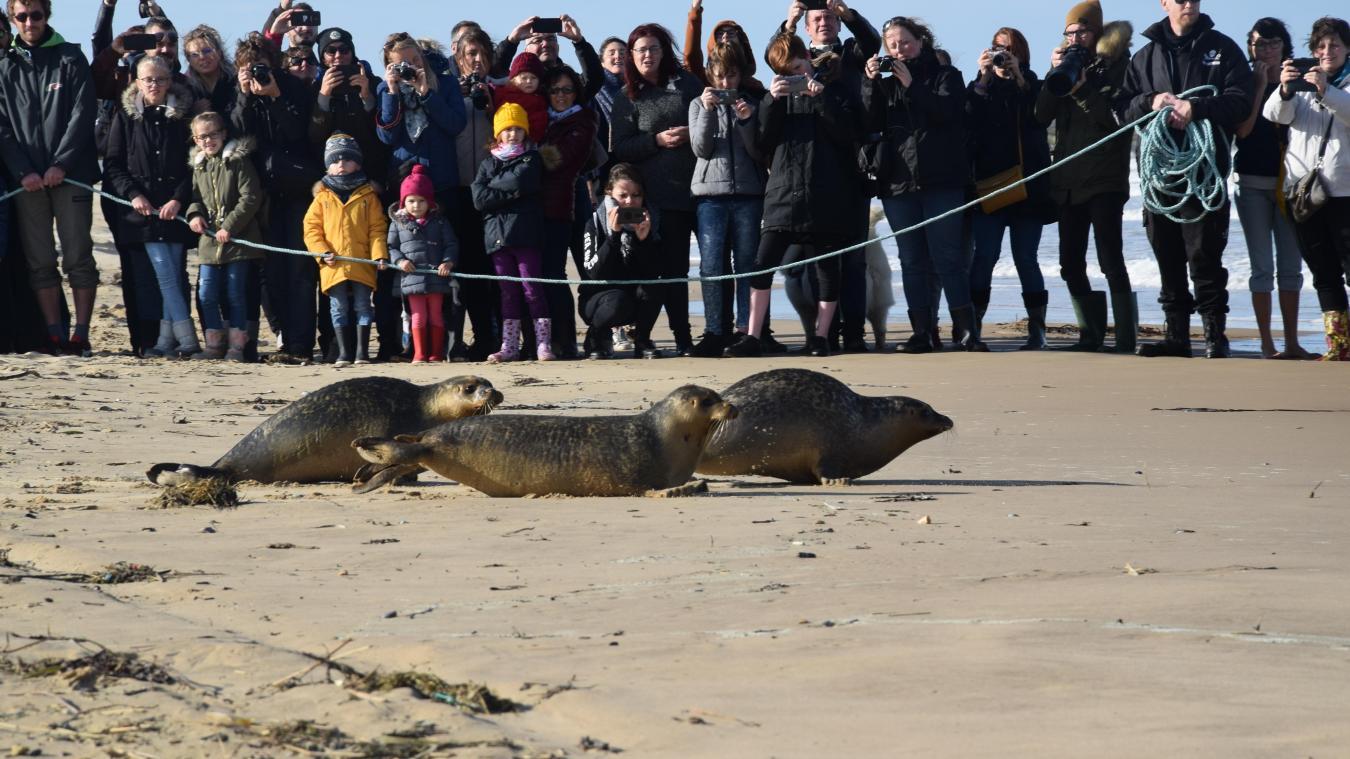 Les mammifères marins ont regagné le large peu après midi.