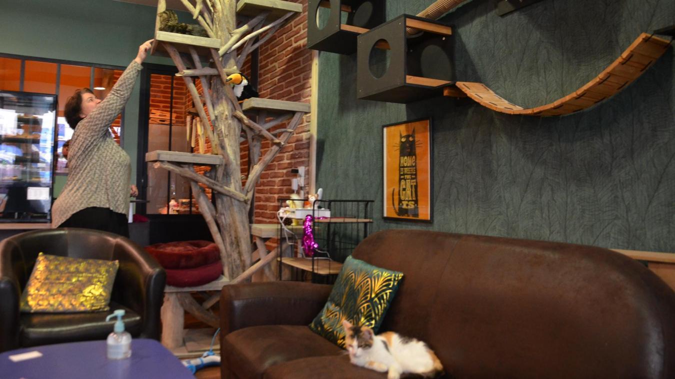 Les anciens locaux du Kawa Coffee House, 105 rue Faidherbe, ont été totalement réorganisés pour accueillir le Chat Puccino, bar à chats.