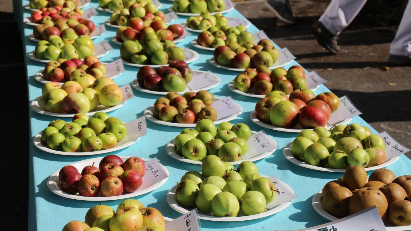 Une exposition pomologique permettra de découvrir quelque 200 variétés de pommes, samedi et dimanche de 10h à 19h. Les festivités se dérouleront à la salle des fêtes et ses abords.