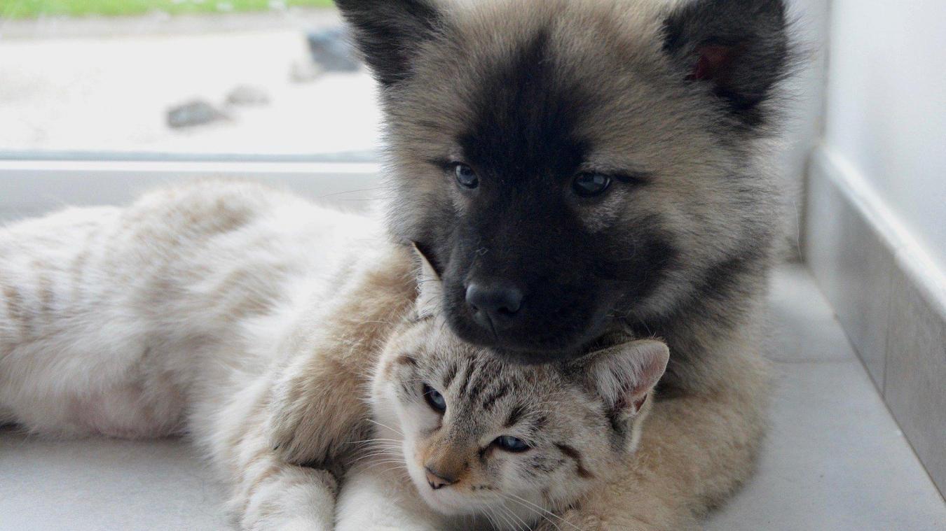 À Bapaume, une formation pour devenir secouriste pour chiens et chats