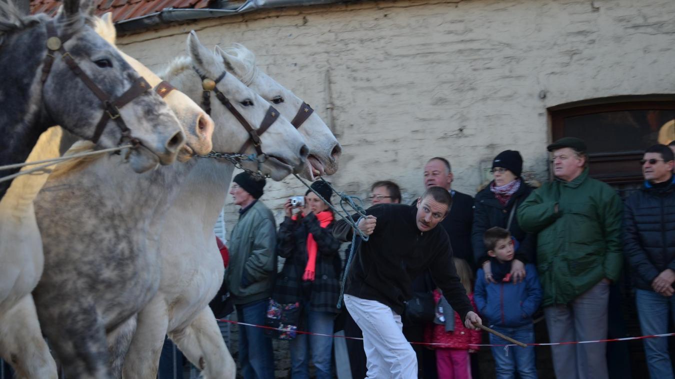 Les passages des chevaux, les puissants Traits, devant le public amassé à quelques mètres, reste l'attraction phare de la Foire aux poulains, le dimanche, en milieu d'après-midi.