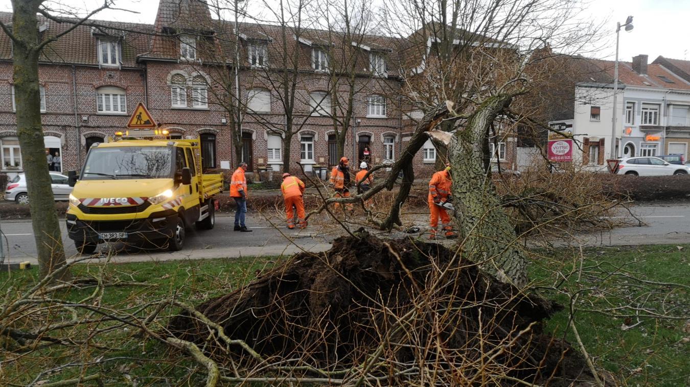 Une des conséquences de la tempête Ciara le long de la rue du Faubourg St Pry à Béthune